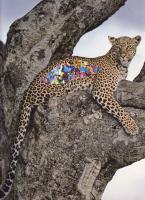 https://www.coupeletat.org:443/files/gimgs/th-5_5_leopard.png